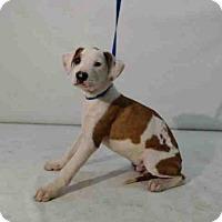 Adopt A Pet :: A364729 - Orlando, FL