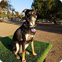 Adopt A Pet :: Emmie - Santa Clarita, CA