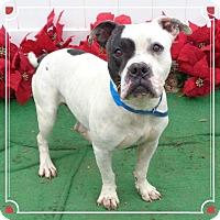 Adopt A Pet :: TUG - available 12/10 - Marietta, GA