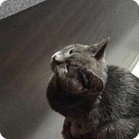 Adopt A Pet :: Cuddles - Lorain, OH