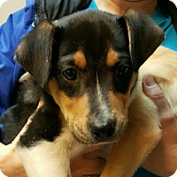 Adopt A Pet :: Nicholas - Gainesville, GA