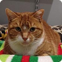 Adopt A Pet :: Bella - Lafayette, NJ