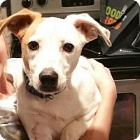 Adopt A Pet :: Baby Sasha - Brownsboro, AL