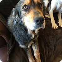 Adopt A Pet :: Vamp - Lyndhurst, NJ