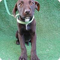 Adopt A Pet :: Boddie - San Diego, CA
