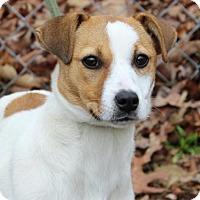 Adopt A Pet :: Lilly - Harrisonburg, VA