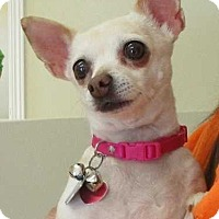 Adopt A Pet :: Piper 2 - Clear Lake, IA