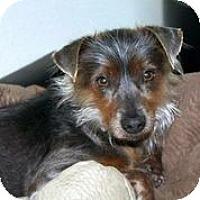 Adopt A Pet :: Paco - Austin, TX
