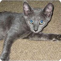 Adopt A Pet :: Huck - Davis, CA