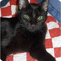 Adopt A Pet :: Abby - Richmond, VA