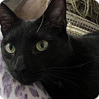 Adopt A Pet :: Mickey - Narberth, PA