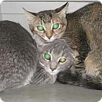 Adopt A Pet :: Reno - Dallas, TX