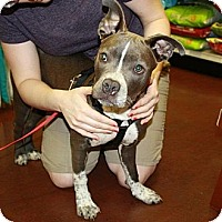 Adopt A Pet :: Mia - Reisterstown, MD