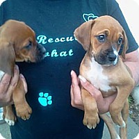 Adopt A Pet :: Rita - Kendall, NY