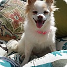 Adopt A Pet :: MAISI