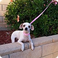 Adopt A Pet :: Dottie - Santa Ana, CA