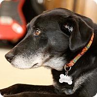 Adopt A Pet :: Precious - Emory, TX