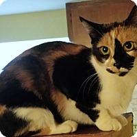 Adopt A Pet :: Leelee and Manman - brewerton, NY