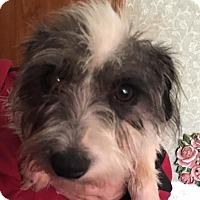 Adopt A Pet :: Brandy Adoption pending - Manchester, CT