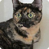 Adopt A Pet :: Rachel - Conroe, TX