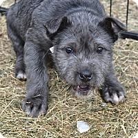 Adopt A Pet :: Clara - Meridian, ID