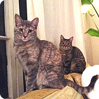 Adopt A Pet :: Lucy & Zoey- sweet sisters - Los Angeles, CA