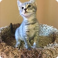 Adopt A Pet :: Brooklyn - Mount Laurel, NJ