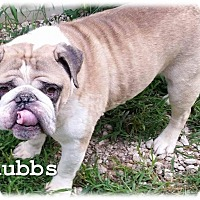 Adopt A Pet :: Chubbs - Decatur, IL