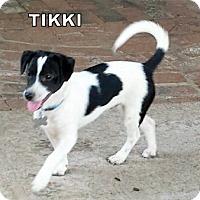 Adopt A Pet :: Tikki - Lindsay, CA