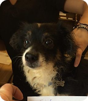Terrier (Unknown Type, Medium) Mix Dog for adoption in Chico, California - Sidney