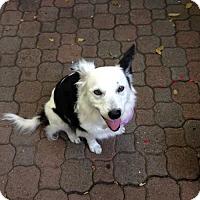 Adopt A Pet :: Jenna - Milpitas, CA