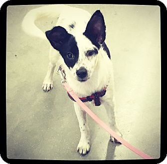 Terrier (Unknown Type, Small) Mix Dog for adoption in Grand Bay, Alabama - Ellie