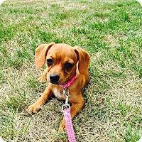 Adopt A Pet :: Joan Jetson - Columbia, MD