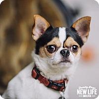 Adopt A Pet :: Morris - Portland, OR