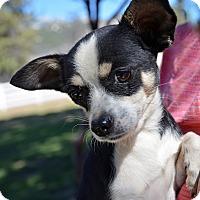 Adopt A Pet :: Luigi - Mountain Center, CA