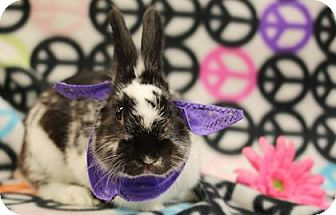 Dwarf Mix for adoption in Voorhees, New Jersey - Friskers