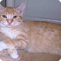 Adopt A Pet :: DOODLE - Peoria, IL