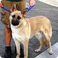 Adopt A Pet :: Prince - Lathrop, CA