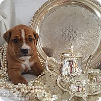 Adopt A Pet :: Miss. Scarlett O'Hara - Homer, NY