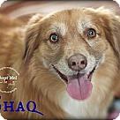Adopt A Pet :: Shaq