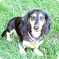 Adopt A Pet :: Mia - San Jose, CA
