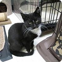 Adopt A Pet :: Lenny - Island Park, NY