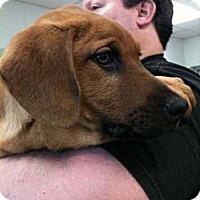 Adopt A Pet :: Santos - Southampton, PA