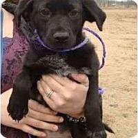 Adopt A Pet :: Gracie - Staunton, VA