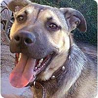 Adopt A Pet :: Thunder - dewey, AZ