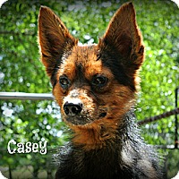 Adopt A Pet :: Casey - Vancleave, MS