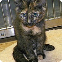 Adopt A Pet :: Courtney - Dover, OH