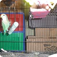 Adopt A Pet :: Tootie - Neenah, WI