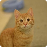 Adopt A Pet :: Hans - Madison, NJ