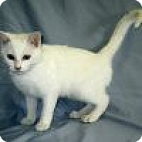 Adopt A Pet :: Angel - Powell, OH